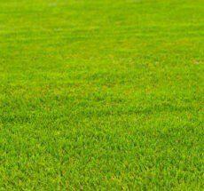 Maintaining artificial grass