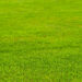 Maintaining Your Artificial Lawn